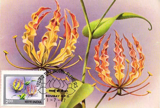 Indian Flower Picture Postcard