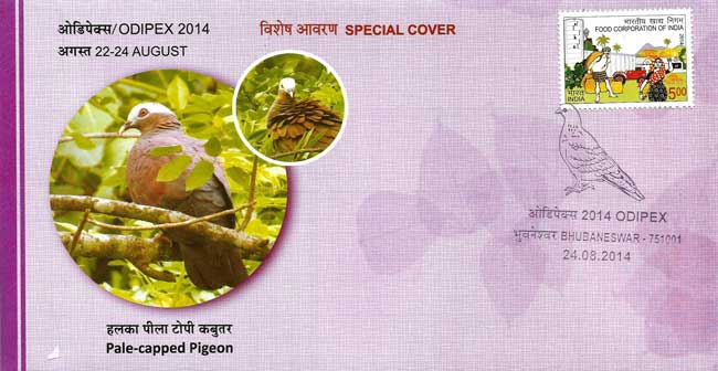 Odipex-2014 Special Cover