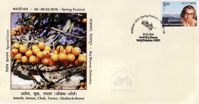 Special Cover featuring sea buckthorn