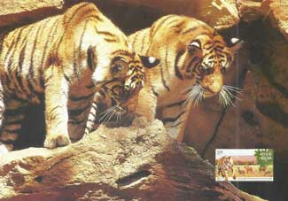 Tiger Cubs, Bandhavgarh National Park