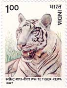 Wildlife - White Tiger