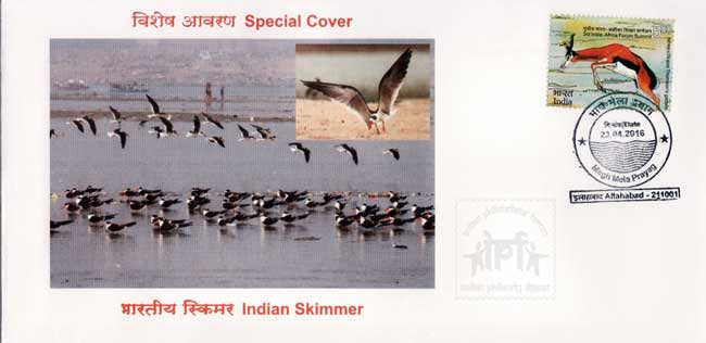 Special Cover on Indian Skimmer