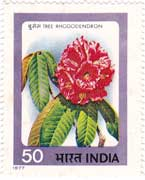 Indian Flowers - Rhododendron